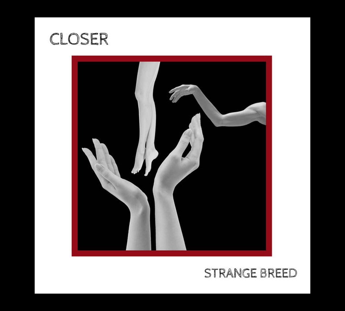 Breed Release Video About Acceptance