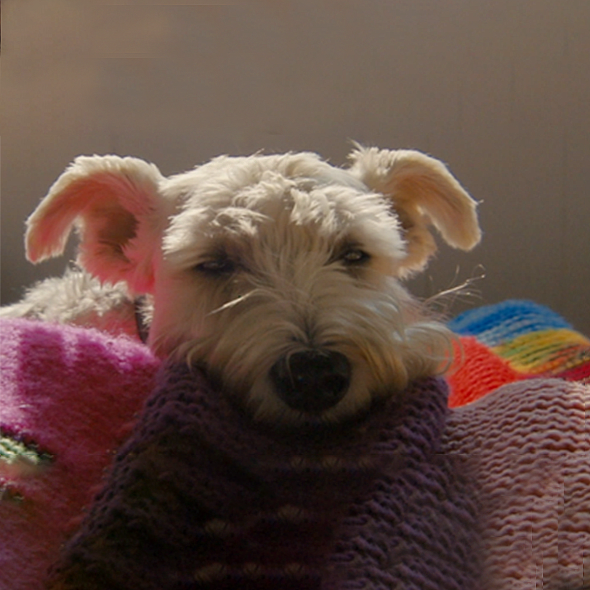 Matt Mays Dog Rhuby